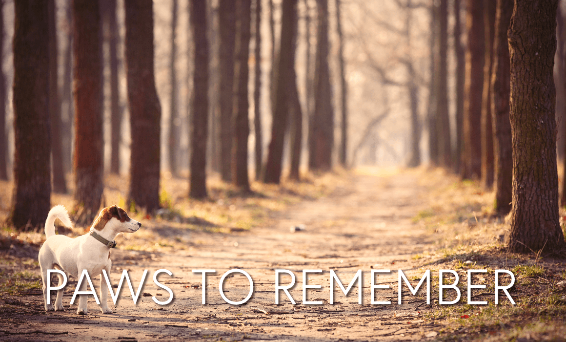 Paws to Remember, pet bereavement support